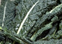 Ricette per celiaci: Farinata di cavolo nero – by Gabriella