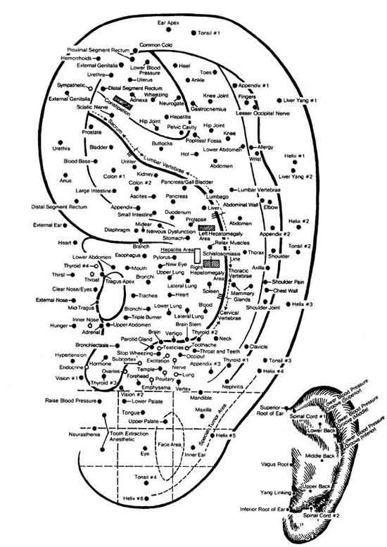 auricolo-agopuntura